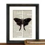 Butterfly Moth Art Print - ..