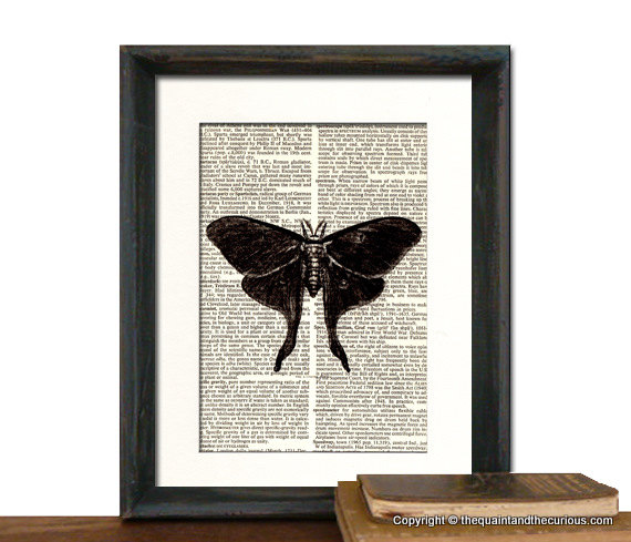 Butterfly Moth Art Print - Mothers Day Fathers Day Graduation Gift Present - Home Office Decor MATTED